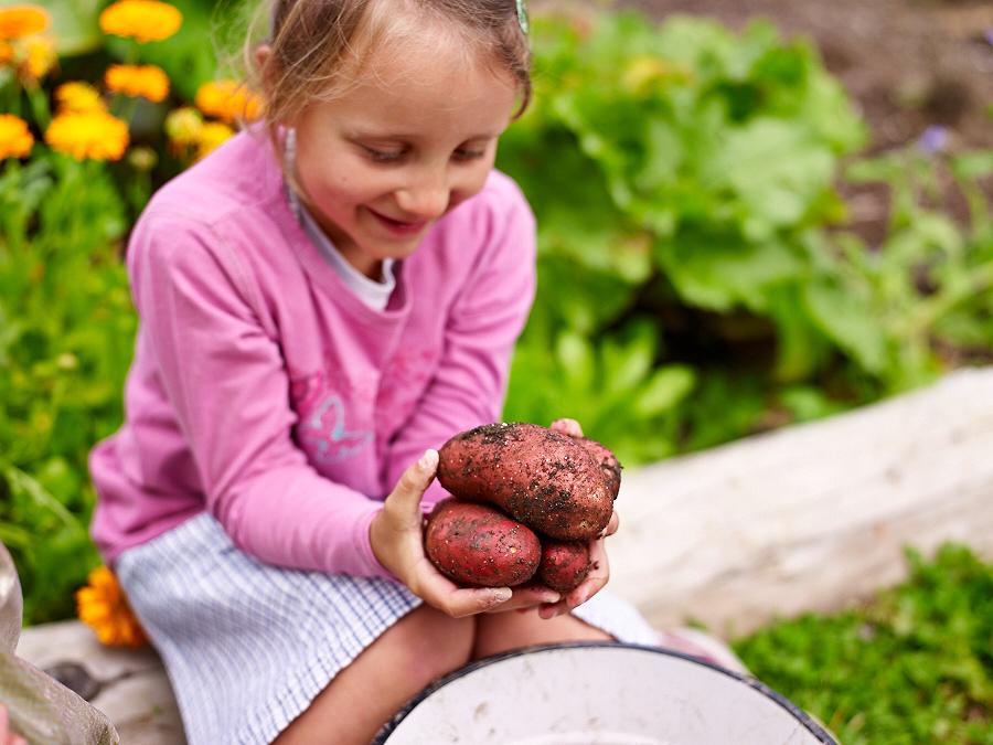 Gemüse ernten und zubereiten